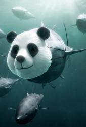 サメiPhone壁紙を保護