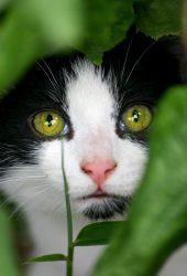 卑劣な猫のiPhoneの壁紙