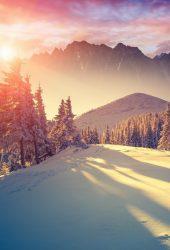 太陽は冬松木を通って光るiPhone8壁紙