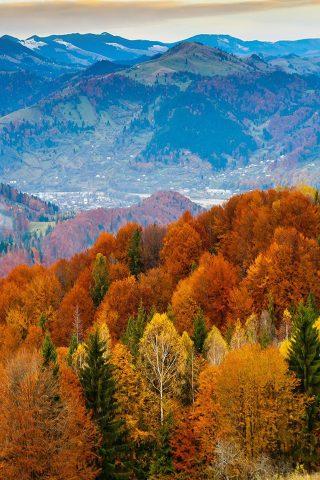 秋の山ラスティ森の色iPhoneX壁紙