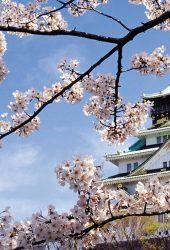 春の桜の宮殿の建築のiPhone 8 Plus壁紙