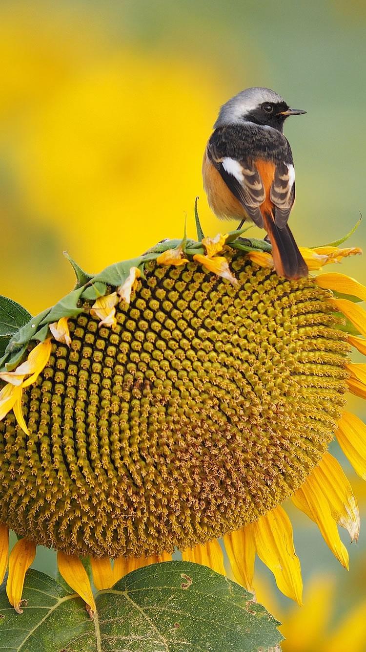 ひまわり鳥の夏iphone 8 7 6壁紙 Iphoneチーズ