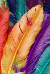 カラフルな羽iPhone壁紙