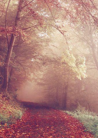 秋の森の道路の色が秋iPhone7壁紙