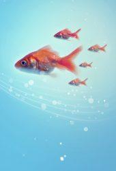 金魚iPhone5壁紙