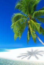 プララン島、セーシェルiPhoneX壁紙