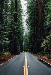 緑の森の道背の高い木iPhone5壁紙