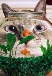 おかしい猫の魚のタンクiPhone 8 Plus壁紙