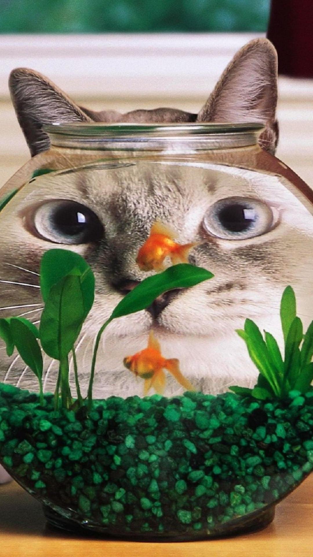 おかしい猫の魚のタンクiphone 8 Plus壁紙 1080 1920 Iphoneチーズ