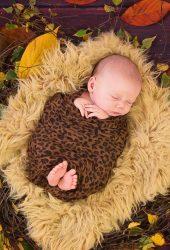 かわいい寝る赤ちゃんの秋は巣のために葉iPhone8Plus壁紙