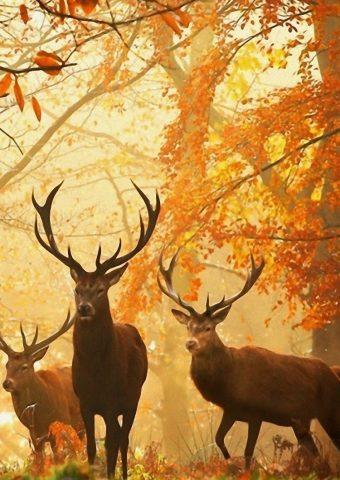 鹿の草は秋の木を残すiPhone6壁紙