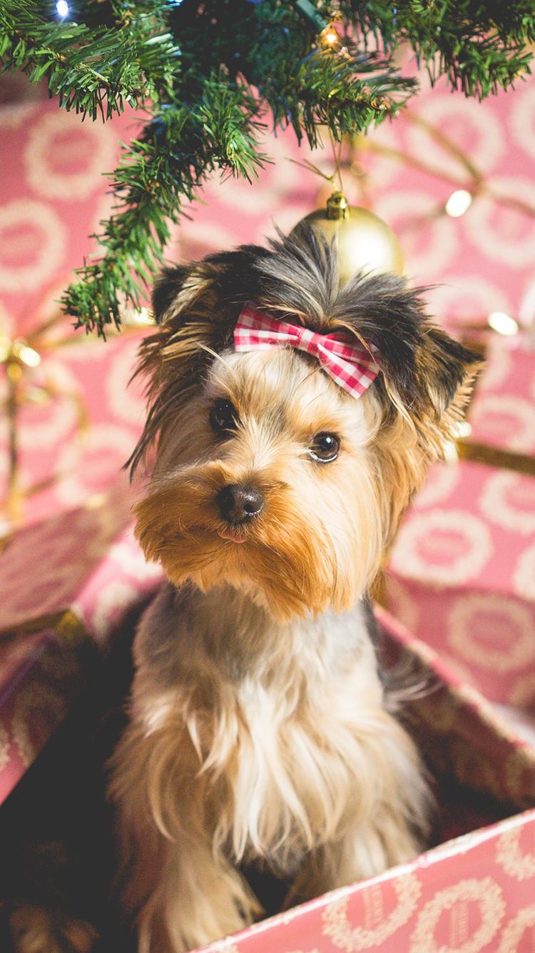かわいい子犬クリスマスプレゼントiphone6休日壁紙 750 1334 Iphoneチーズ