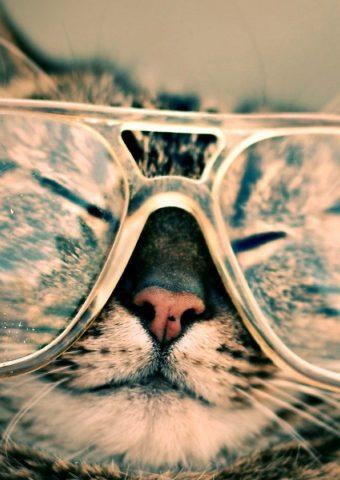 おかしい猫眼鏡iPhone 8 Plus壁紙