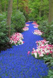 オランダの花の川iPhone 8/Android壁紙