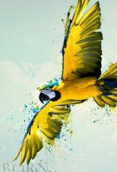 飛ぶオウムに生まれたiPhone 7/Android壁紙