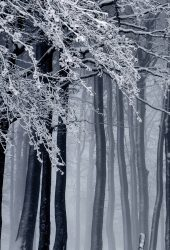 冬の森iPhone X/Android壁紙