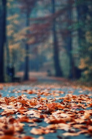 秋のさびた葉公園路地iPhone 6/Android壁紙
