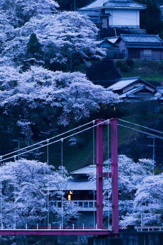 日本の橋さくらナイトiPhone XR/Android壁紙