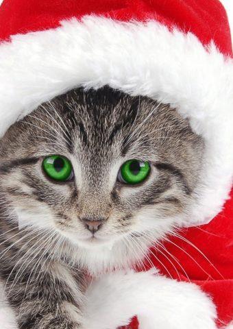 クリスマスキャットiPhone 7 Plus/Android壁紙