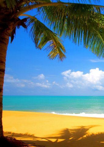 パームツリーゴールデンビーチシーサイドiPhone 8 Plus/Android壁紙