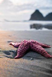 ビーチで海の星を閉じる無料壁紙