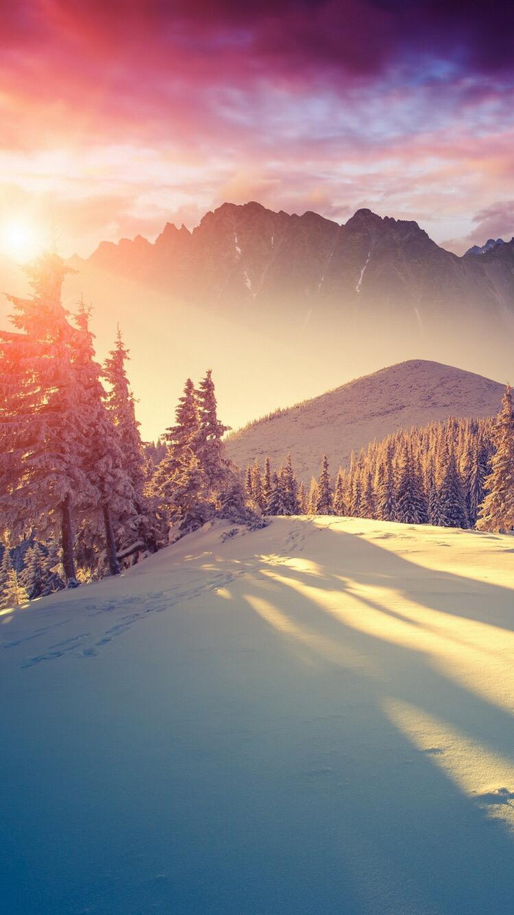 冬の松の木を通して輝く太陽iphone 6 Android自然壁紙 Iphoneチーズ