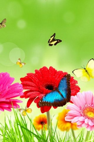 カラフルな春の花の美しい蝶 スマホ 壁紙