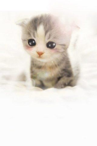 かわいいスコティッシュフォールド子猫のスマホ壁紙