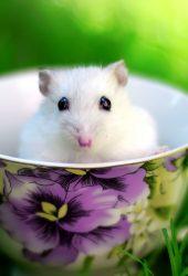 コーヒーのカップに小さな白いマウス無料壁紙