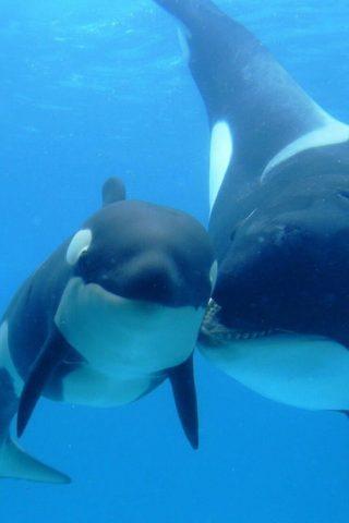 甘い赤ちゃんは動物やクジラの母親を参照してくださいiPhone XR壁紙