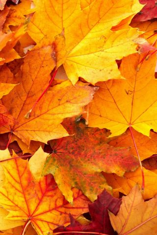 秋スマホ壁紙