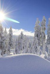 雪の森iPhone X/Android壁紙