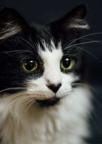 白と黒猫のスマホ壁紙