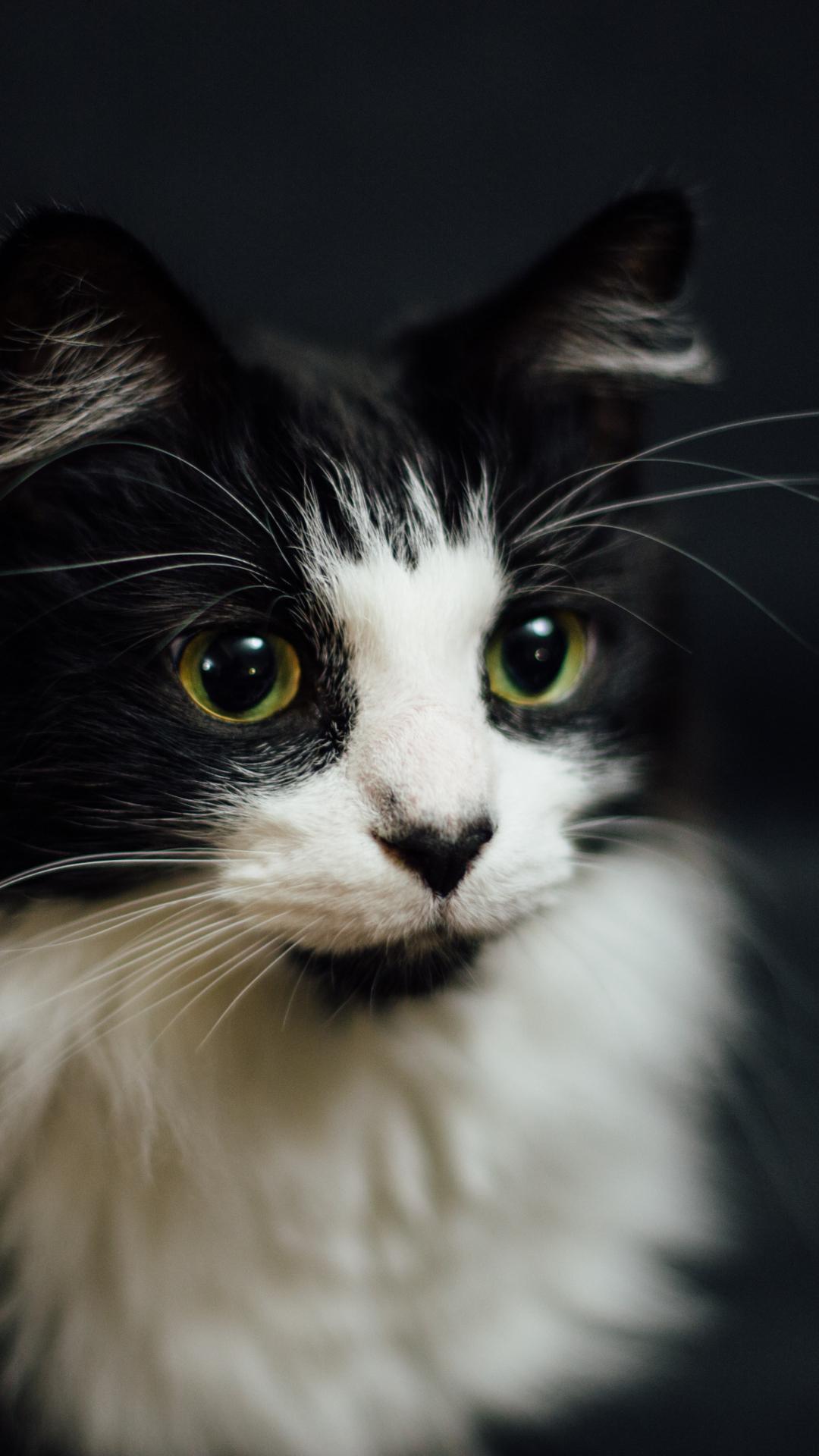 白と黒猫のスマホ壁紙のiphone 8 Plus Android 动物 Iphoneチーズ