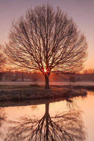 水の中の木の反射の壁紙