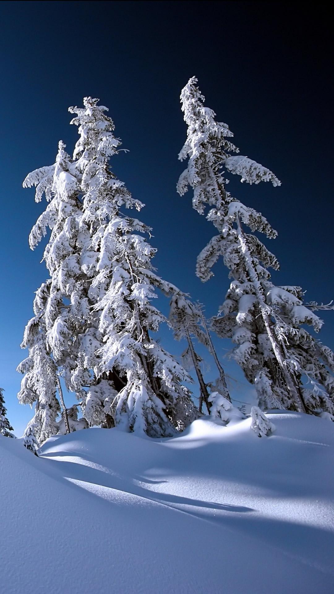 雪に覆われた冬のスマホ壁紙