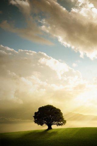 木と草原のiPhone 8 Plus壁紙